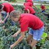 Students volunteer at a food pantry garden