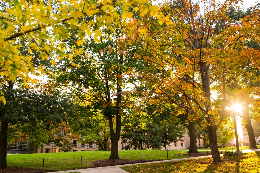 bascom hill in autumn with the sun peaking through